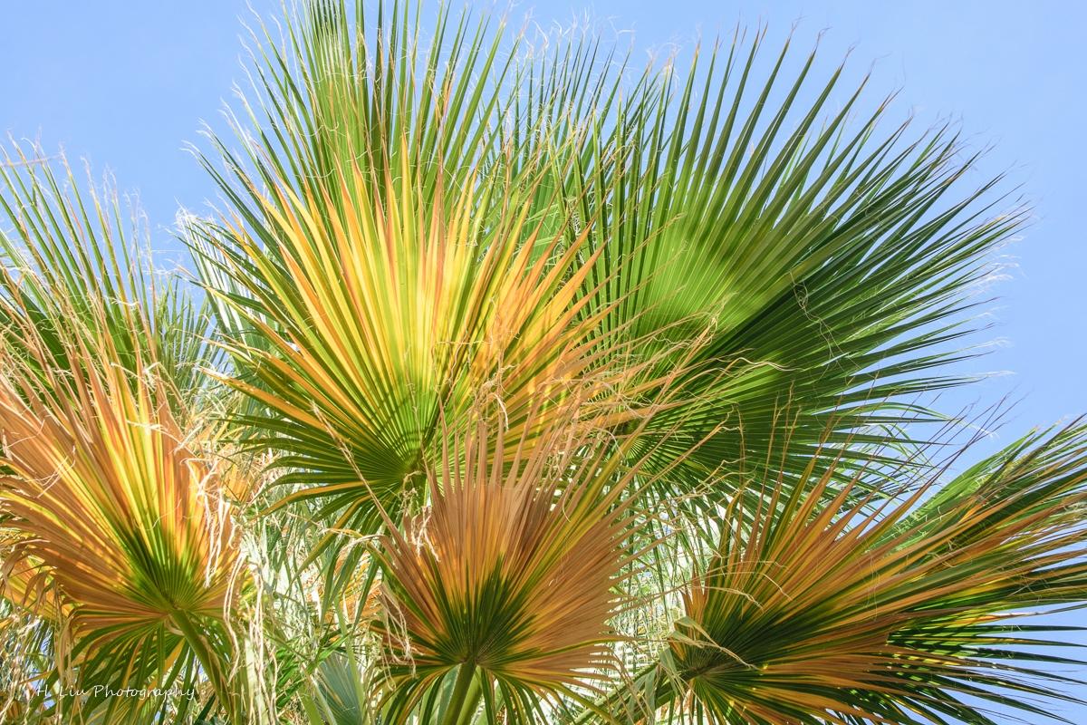 Palm SpirngsDSC_6115.jpg
