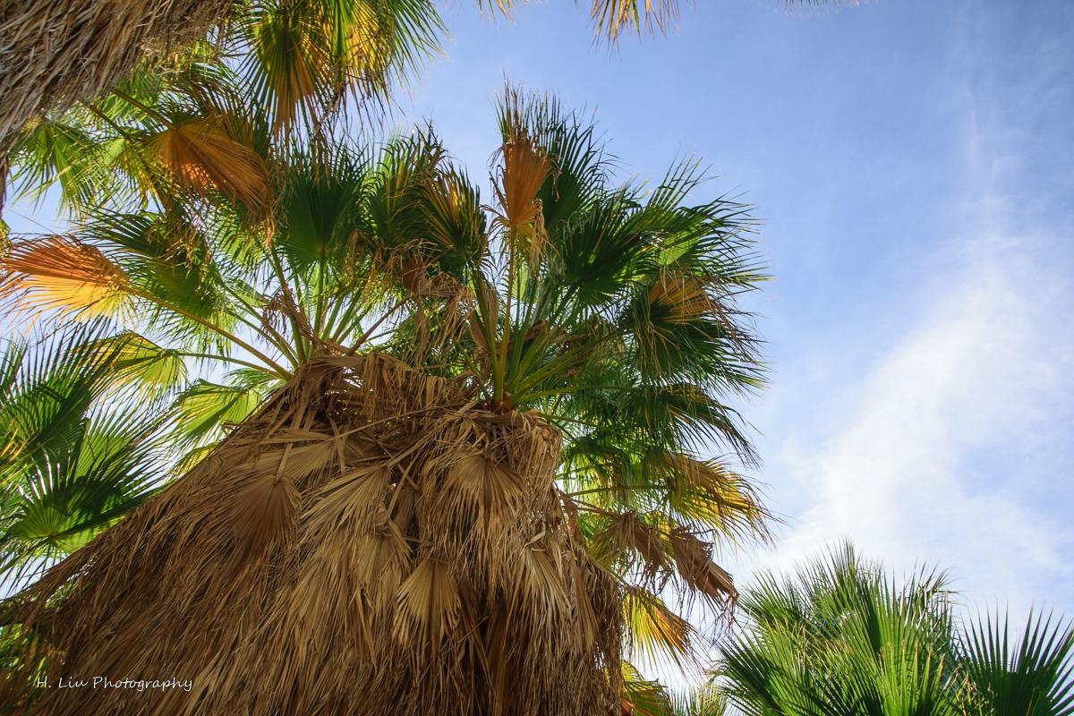 Palm SpirngsDSC_6113.jpg
