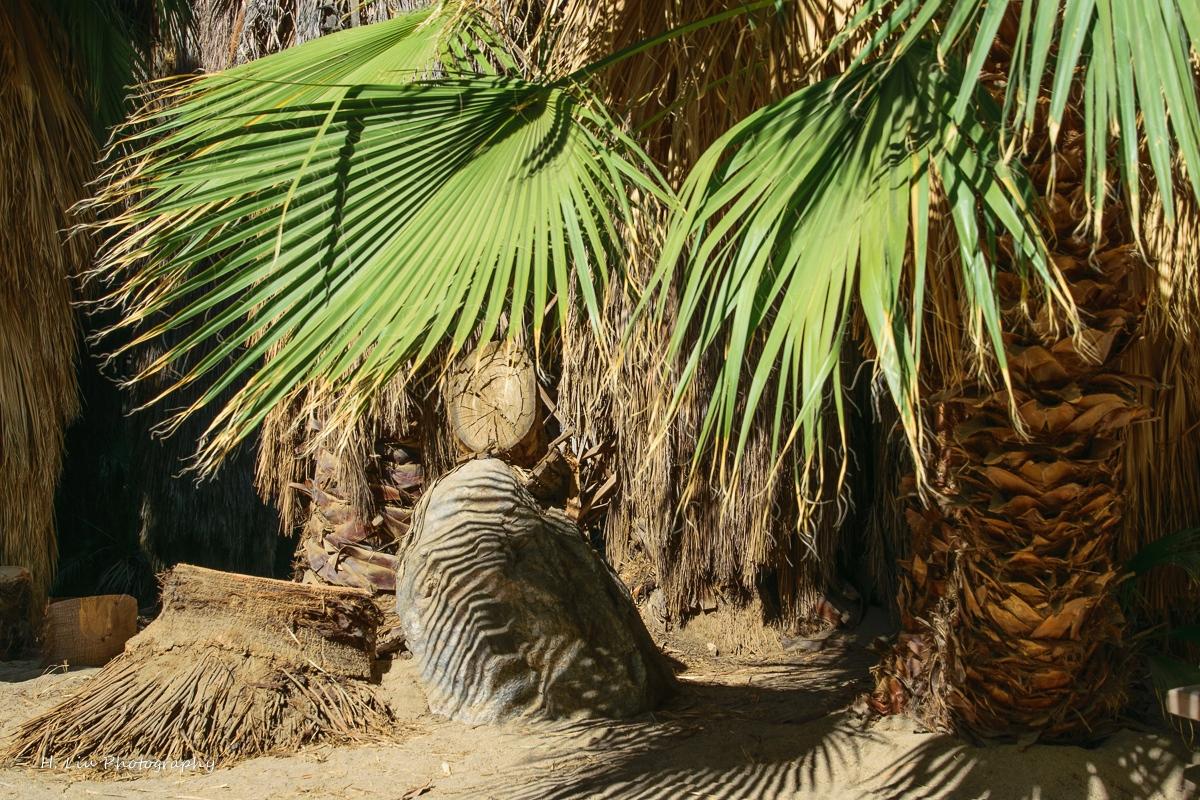 Palm SpirngsDSC_6097.jpg