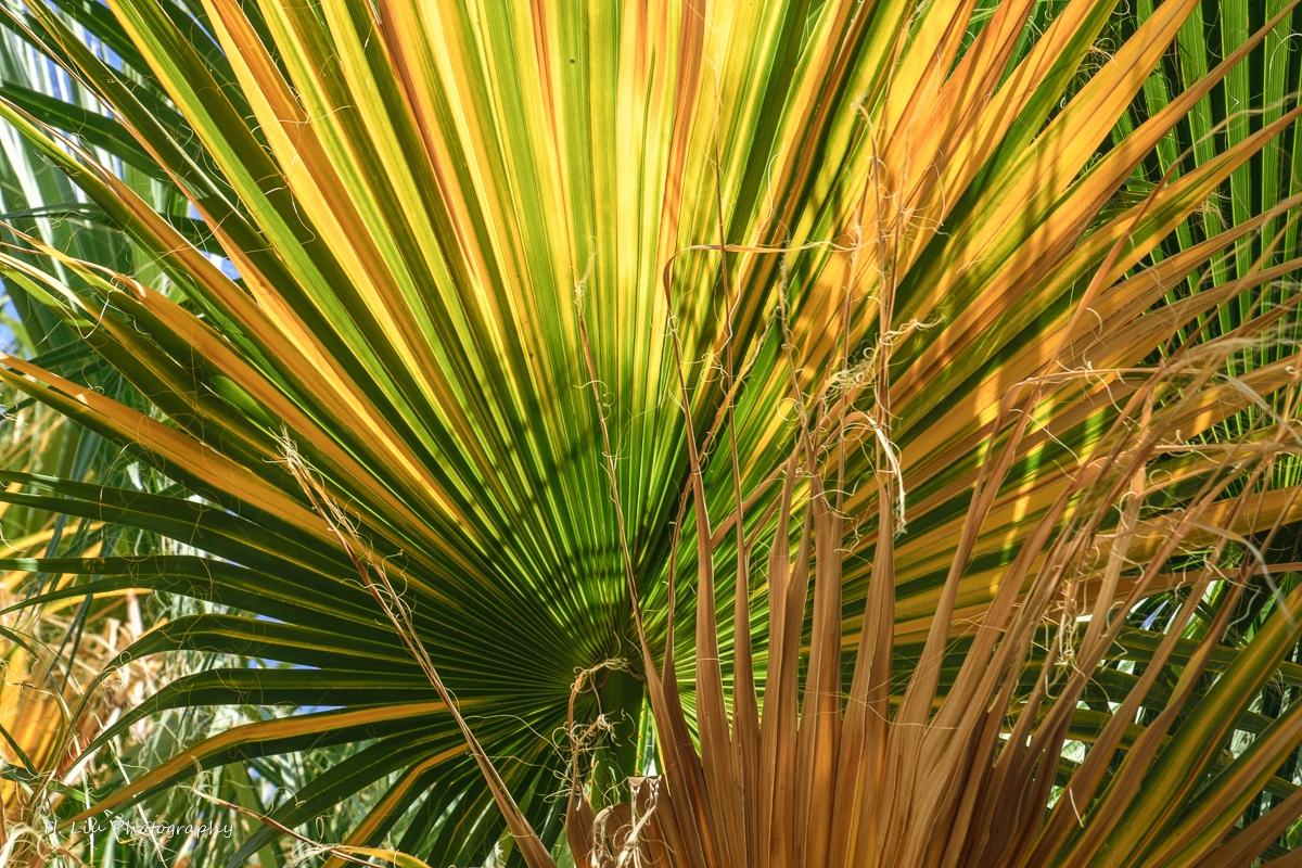 Palm SpirngsDSC_6116.jpg