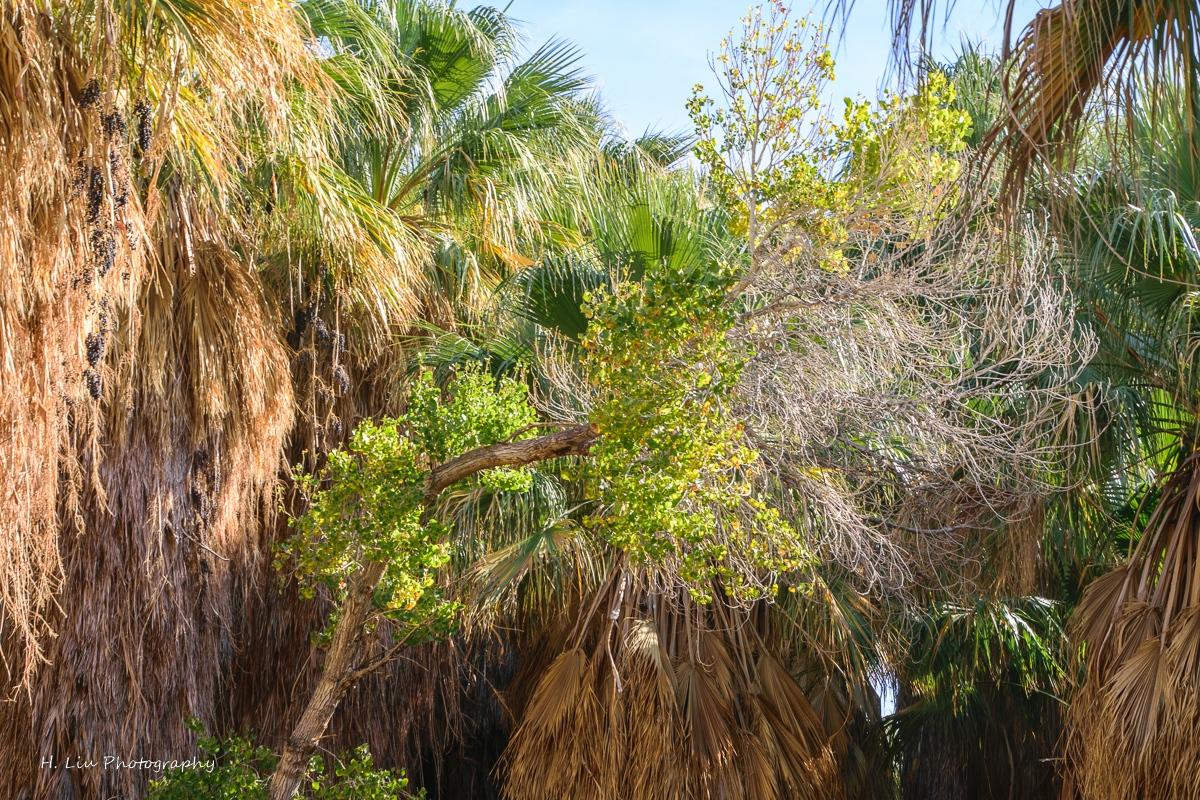 Palm SpirngsDSC_6109.jpg
