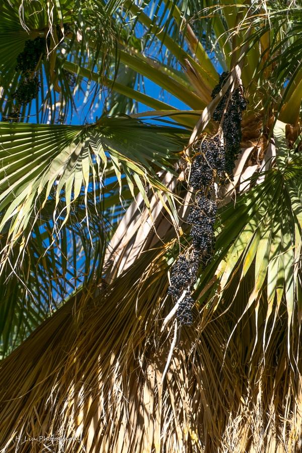 Palm SpirngsDSC_6101.jpg