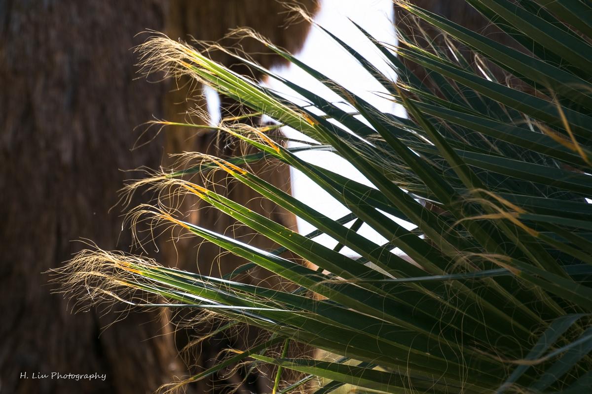 Palm SpirngsDSC_6102.jpg